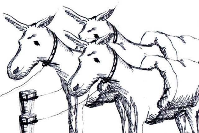 photo  Collectif Les Trois Mulets compagnie en résidence